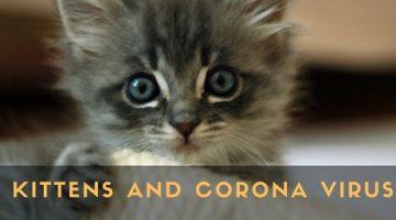 Kittens-and-corona-virus