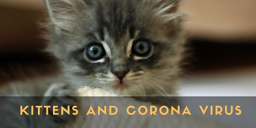 Kittens-and-corona-virus
